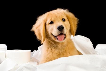 puppy training fort lauderdale