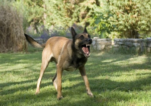 aggressive dog behavior modification fort lauderdale dog trainer