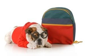 dog training executive program broward