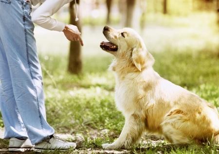 private dog training fort lauderdale broward