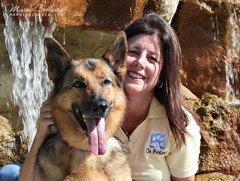 Private and Group Dog Training Programs