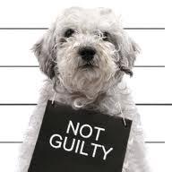 Free Dog Behavior Seminar Broward