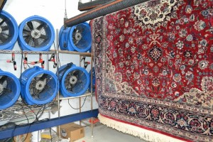 Pet stains and odor oriental rugs