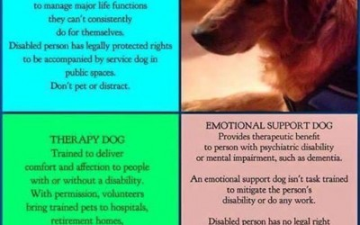 4 Things You Need to Know About Service Dogs and ESAs