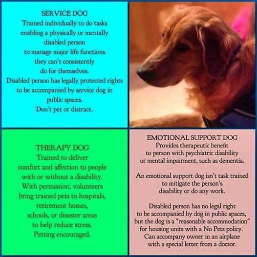 Service Dogs Emotional Support Dogs