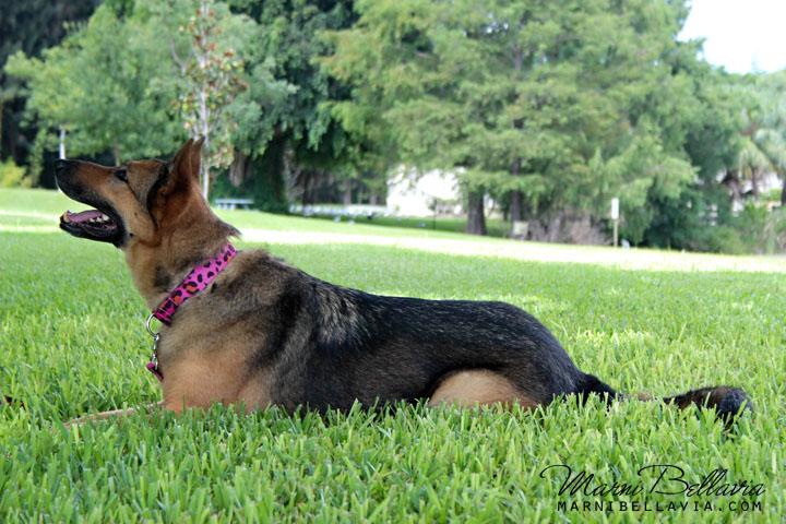 Canine Good Citizen (CGC) program broward