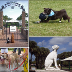Best dog park in Broward