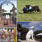 Best dog park in Broward