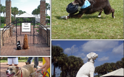 Best and Newest Dog Parks in Broward