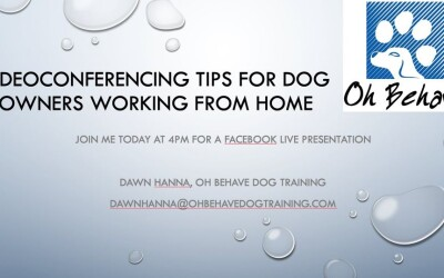 Videoconferencing Tips for Dog Owners